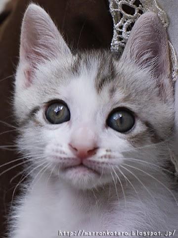 光彩の色が変化し始めた子猫