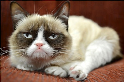tardar sauce aka. grumpy cat