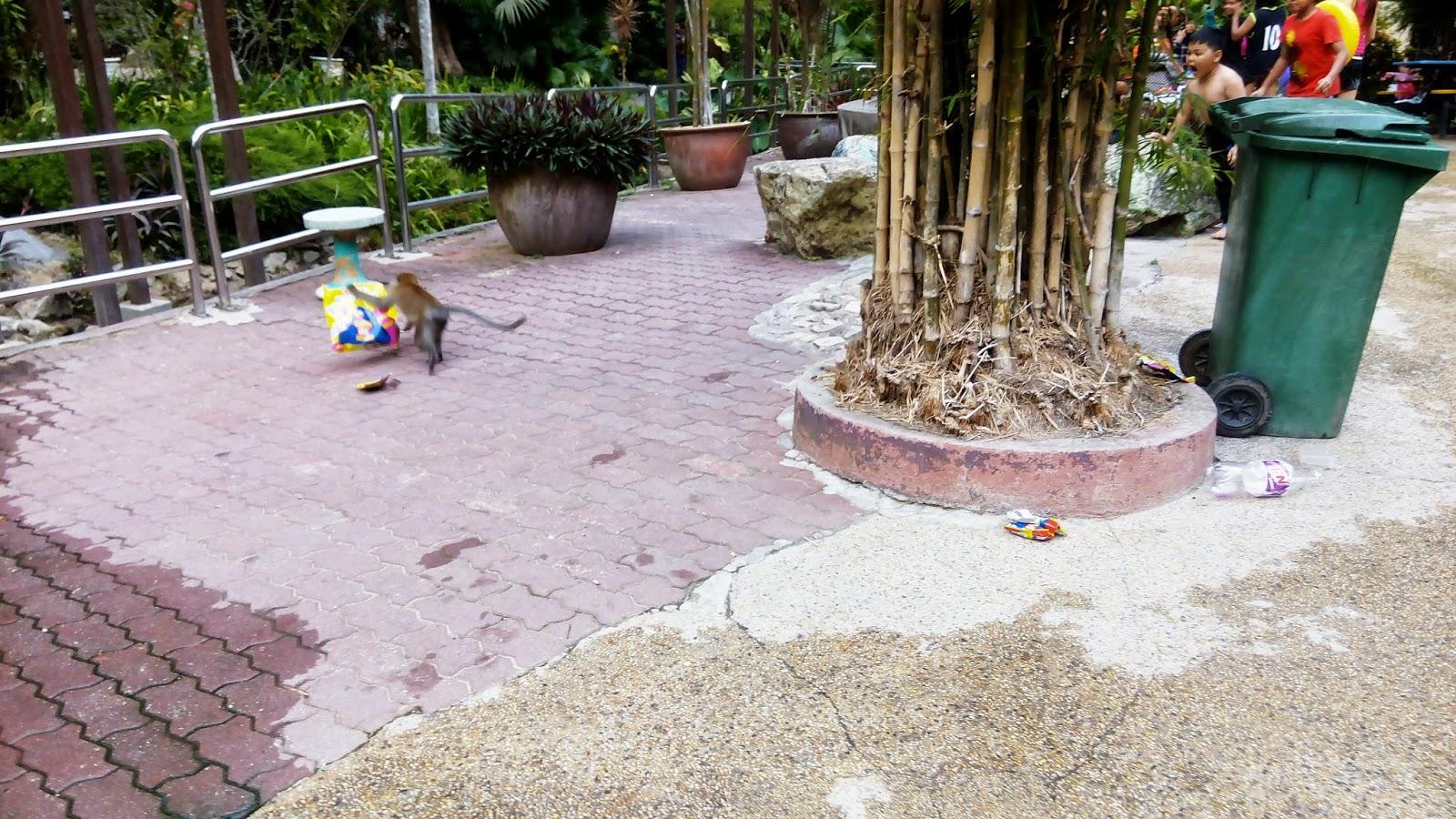 monyet, taman belia, pulau pinang, riadah