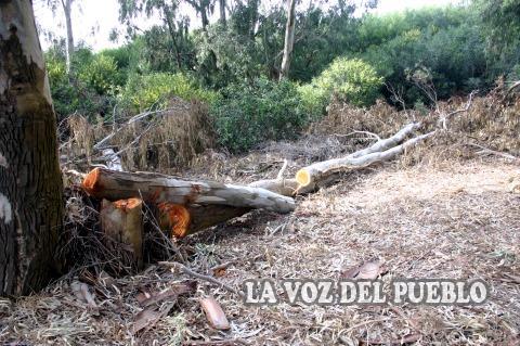 Por el claromec que queremos tala de pinos en el vivero for Viveros en salto