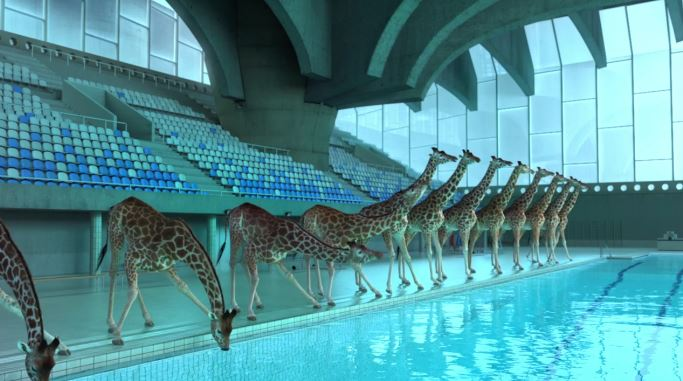 5 Mètres 80: Una absurda animación mostrando una manada de jirafas saltando en el agua desde lo alto