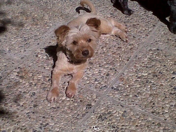 Kika, mi perra