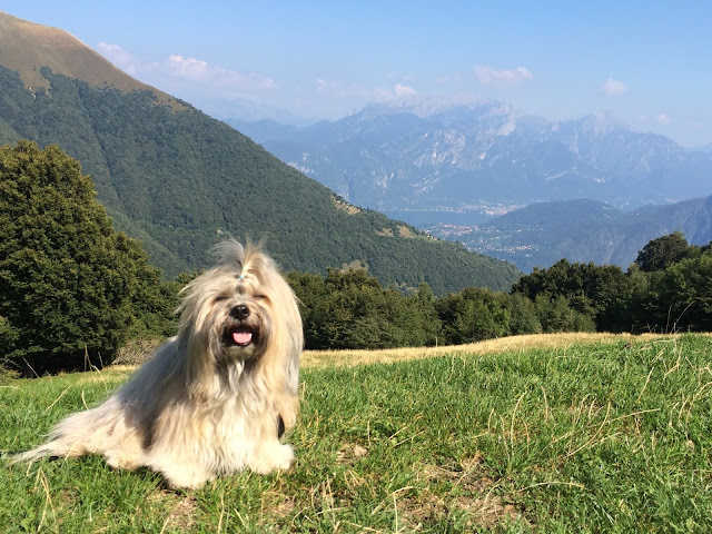 Rocco near Monte di Lenno above dog-friendly Lake Como