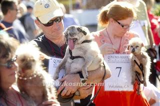 Pertandingan Anjing Paling Hodoh Di Dunia