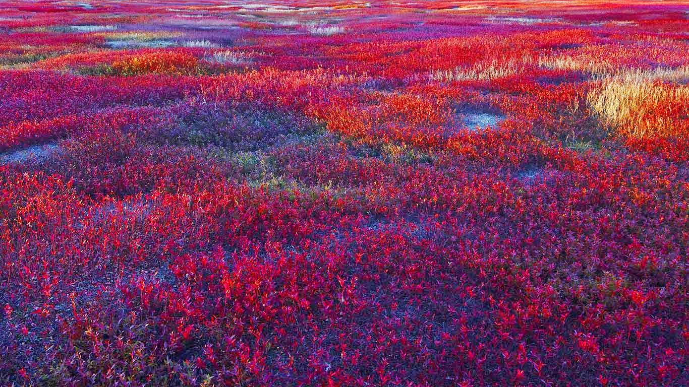 Lowbush blueberry barrens near Meddybemps, Maine (© Rudi Sebastian/Getty Images) 117