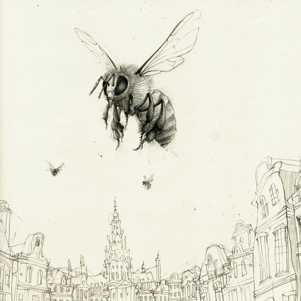 Mellferopolis, dibujo