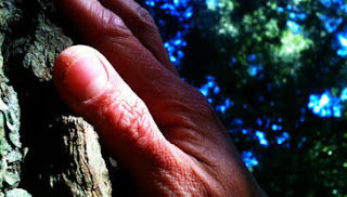 """El tacto es uno de los sentidos que se más se trabajan en """"A pie por los bosques""""."""