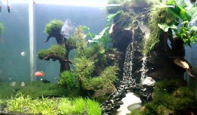 Trik Sederhan Untuk Membuat Air Terjun Aquascape