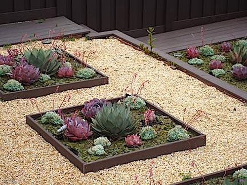 Succulents - Succulent gardens - how to mack succulent