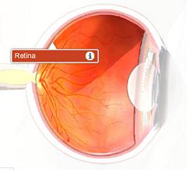 Fungsi dari bagian retina