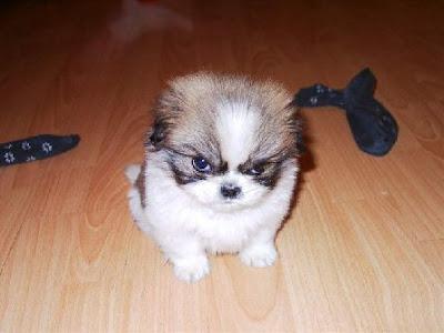 smiješne slike pas