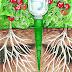 Alternative Gardning: Garden Self-Watering Cones