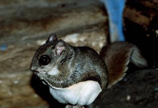 Hewan-hewan imut di Indonesia