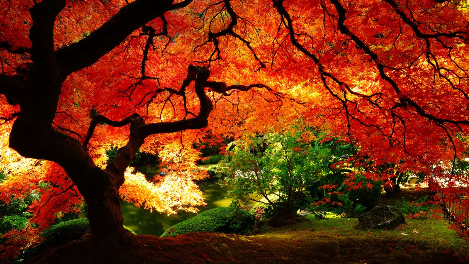 Nature Desktop Backgrounds Wallpapers - HD Wallpapers Blog