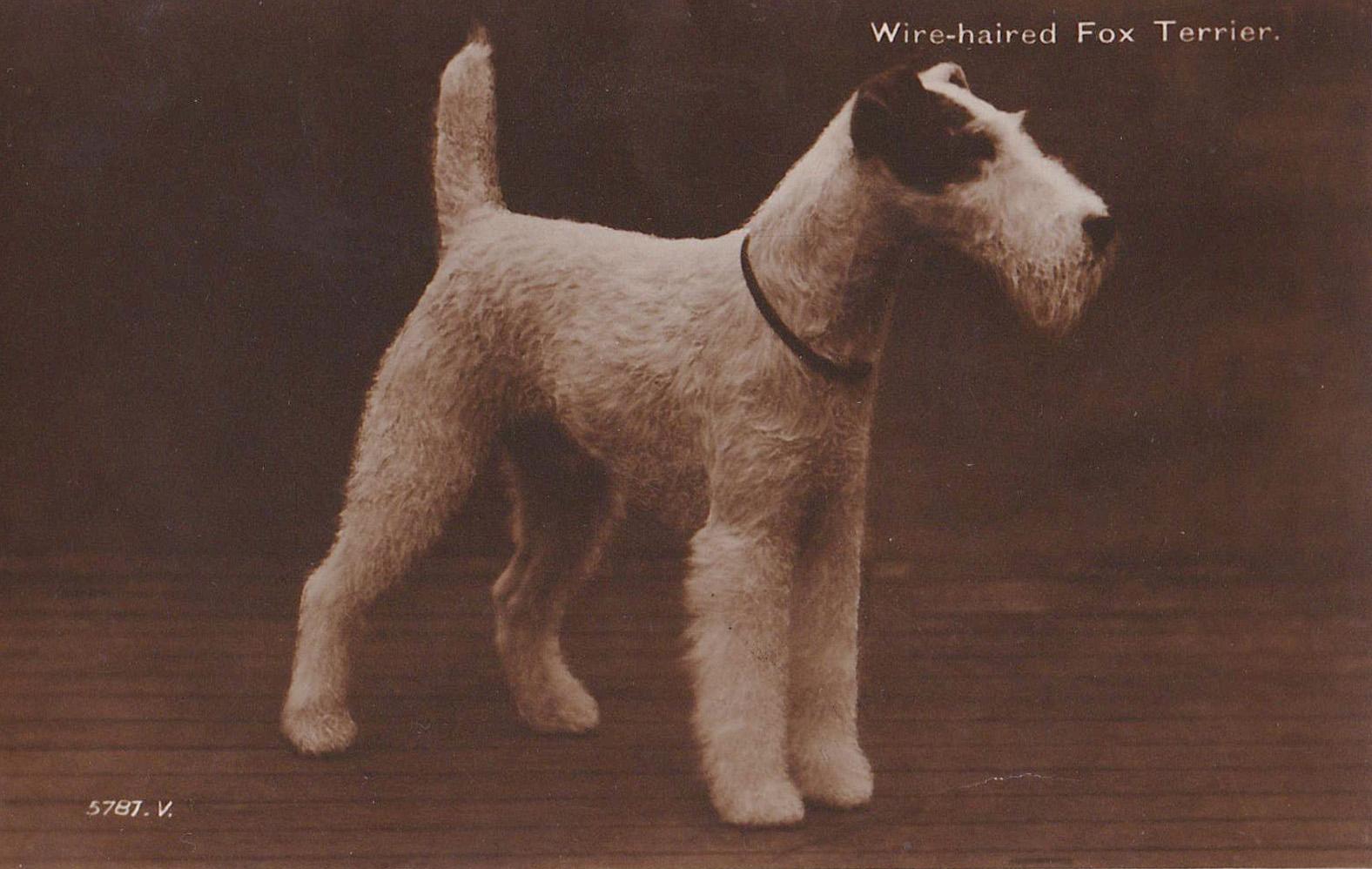 Мы вас помним. Истории известных собак.