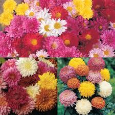 Jardin et fleure