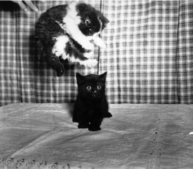 Cute kitten fight picture, funny cat picture, cute kitten