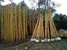 http://tukangtamanqu.blogspot.com/2014/12/pembuatan-taman-rumah-bambu-hias-bambu.html