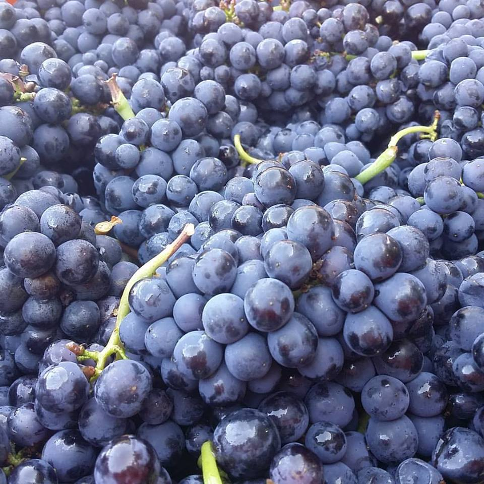 Vins Etonnants 2015 Anne Exceptionnelle