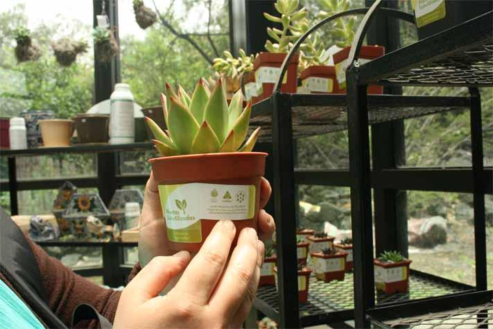 C digos de barras de la vida silvestre m xico barcode of for Jardin botanico unam 2015