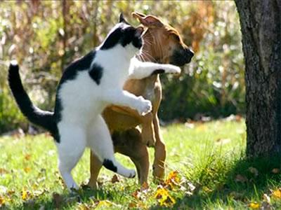Pelea de gato con perro