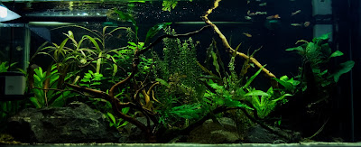 low tech aquarium,