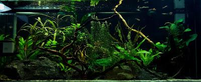 low tech aquarium,