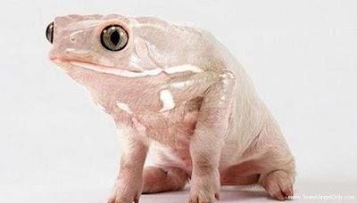 funny_picture_funny_frog_vandanasanju.blogspot.com
