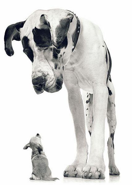 foto,perro,fotografia,dog