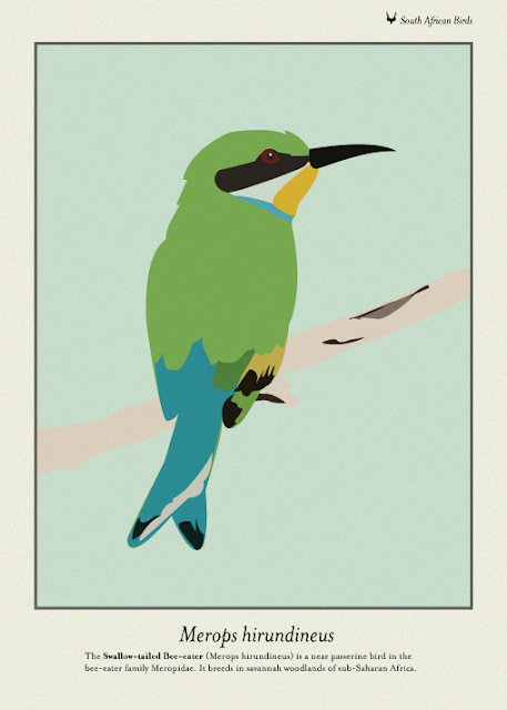 bee eater - merops hirundineus - south african native bird - There & Here