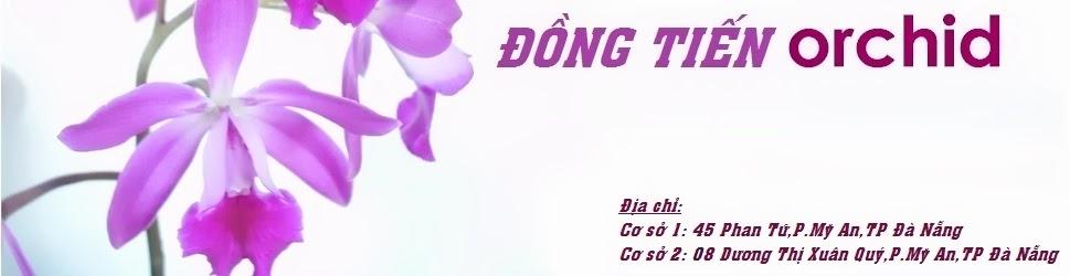 Hoa Lan Dong Tien