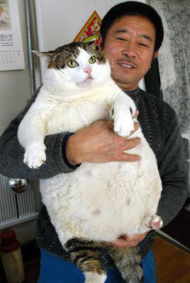 World biggest cats pictures