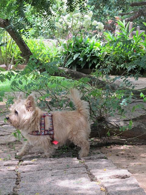 Hotel Fazenda Cana Verde passeio perto de São Paulo com criança e cachorro Itu dicas natureza