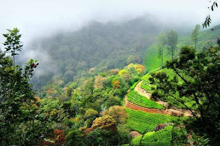 Munnar (Best Honeymoon Destinations In India) 10