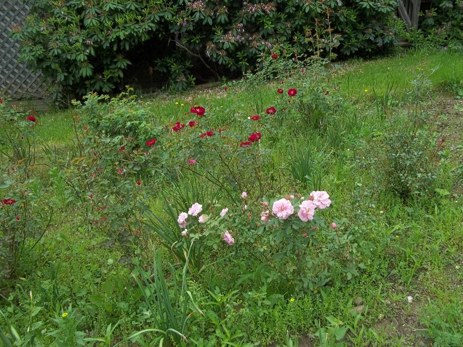 Glory\'s Garden: I Never Promised You a Rose Garden