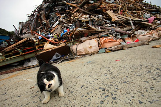 cats of fukushima