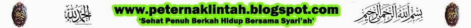PETERNAK LINTAH JAWA TIMUR - 081230855989 - JUAL GROSIR DAN ECERAN LINTAH TERAPI /RAWA INDONESIA