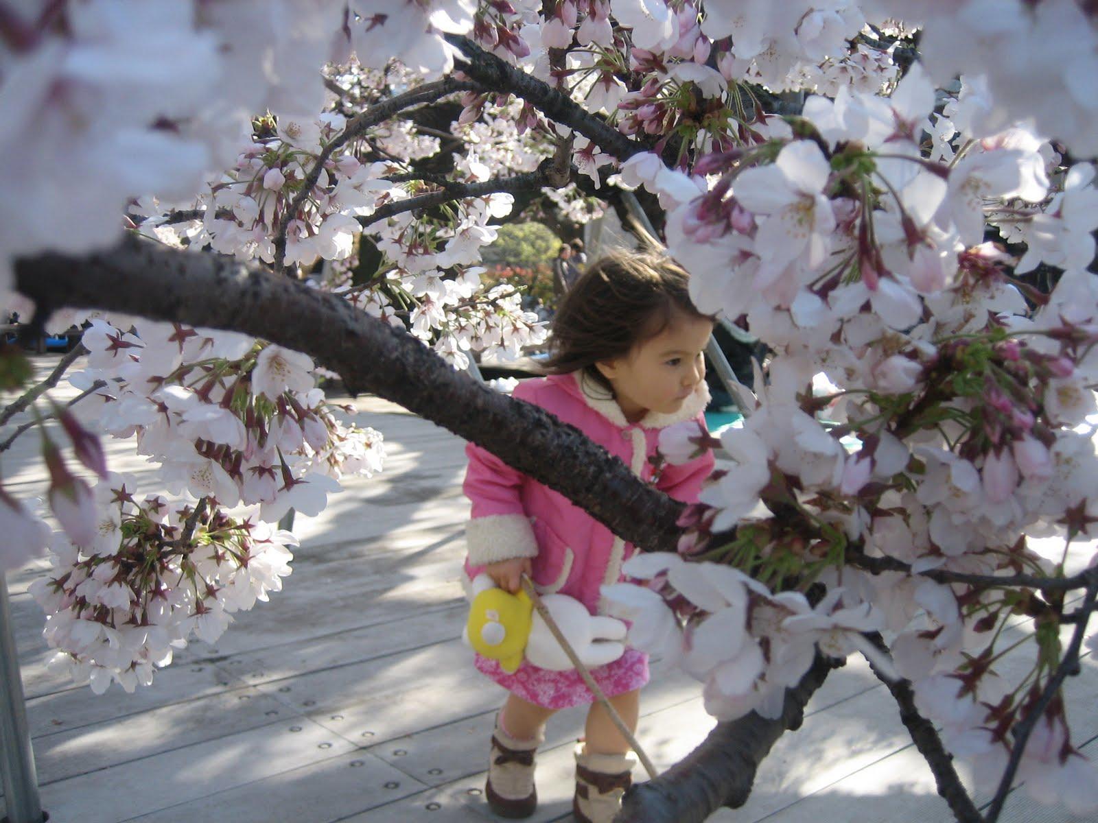 http://1.bp.blogspot.com/-V7mIa4xsYrI/TZZ4c0TxiuI/AAAAAAAABDg/nmdsQzyi8XI/s1600/Hanami%2BChild.JPG