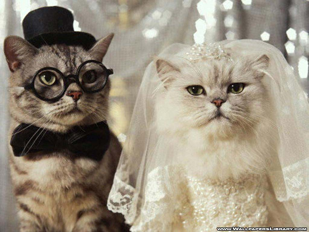 2 Cute Animal Pics Cute cat couple being married