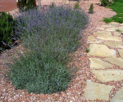 Aromas en el jard n - Jardines con plantas aromaticas ...