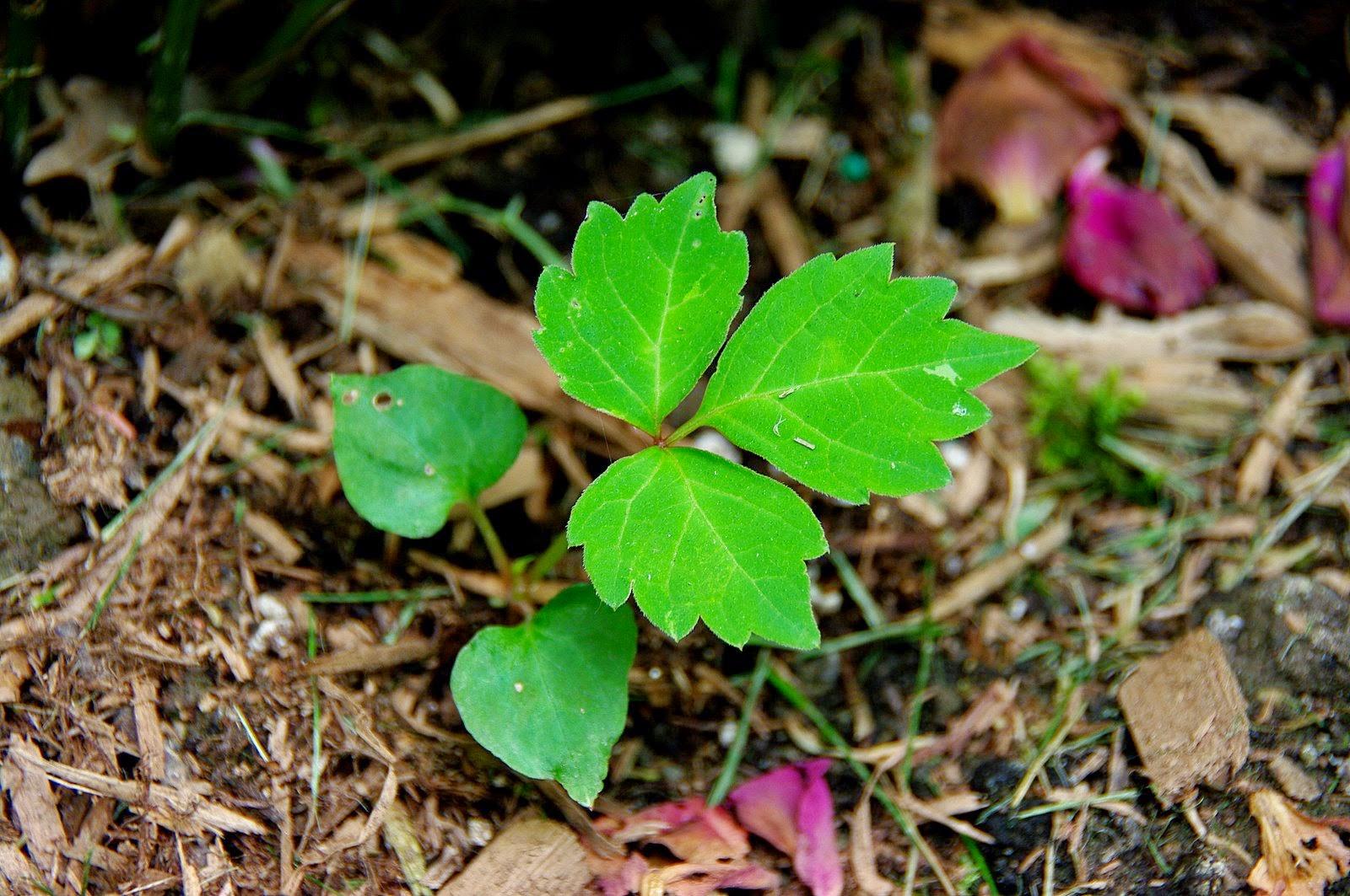http://bog-archive.araska.org/labels/garden.html