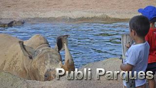 Niños observando cómo se bañan los rinocerontes - cara a cara con los animales salvajes - BIOPARC Valencia