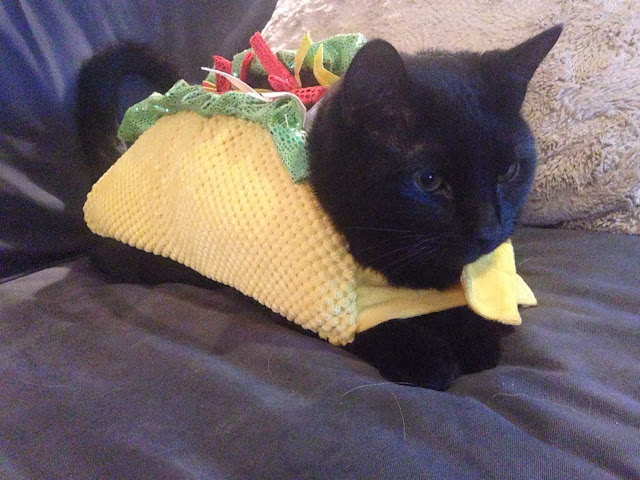 Funny cats - part 79 (35 pics + 10 gifs), cat in burrito costume