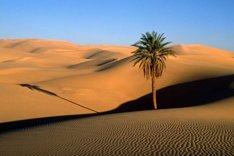 """<a href=""""http://arabiasaudyjska-ksa.blogspot.com""""><b>Arabia Saudyjska</b></a>"""