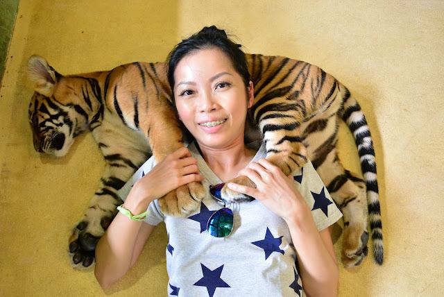 phuket tiger zoo