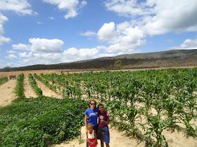 Projeto de irrigação em Inajá