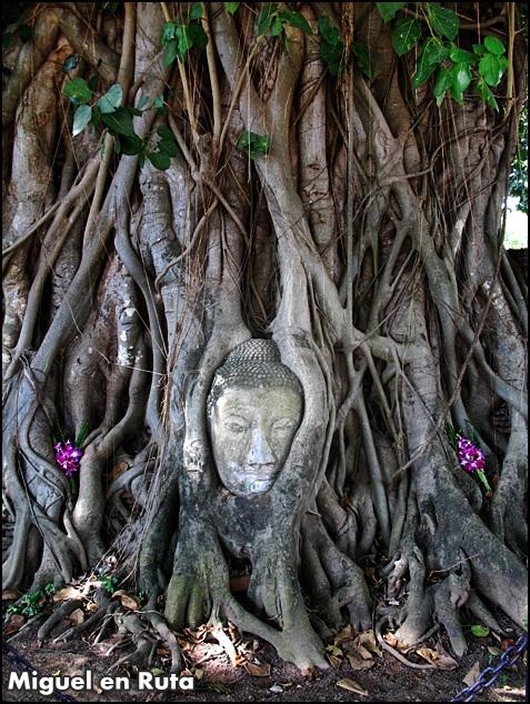 Buda-raíces-Ayutthaya