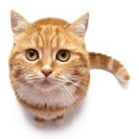 O Gato Carioca