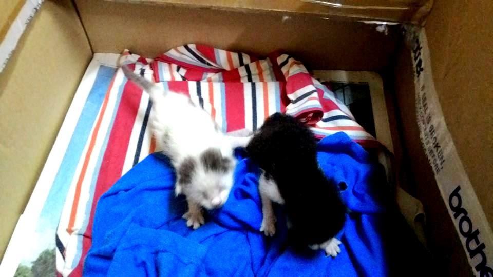 Kucing baru lahir