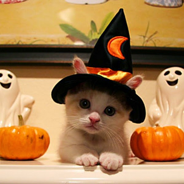 Funny halloween animals 18